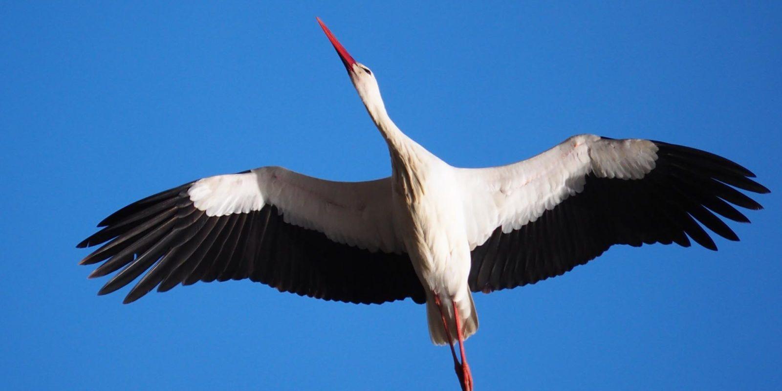птицы Беларуси birds Belarus наблюдение за птицами