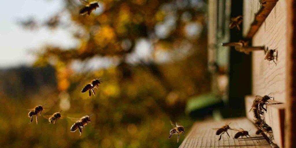 пасека купить мед