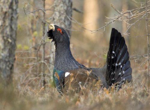 природа птицы Беларусь