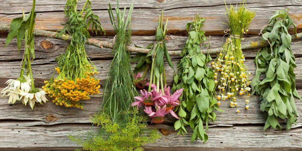 травы чай herbs tea