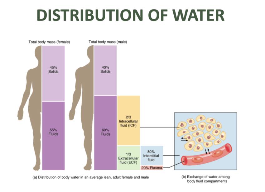 функции воды