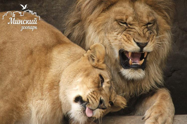 зоопарк минск детский отдых