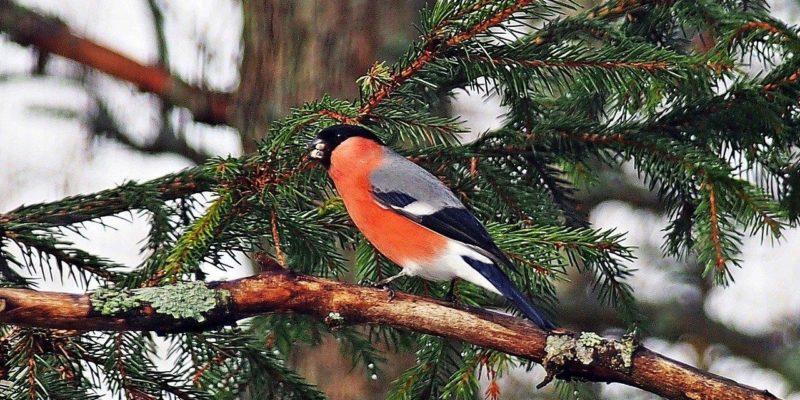 зима чем кормить птиц