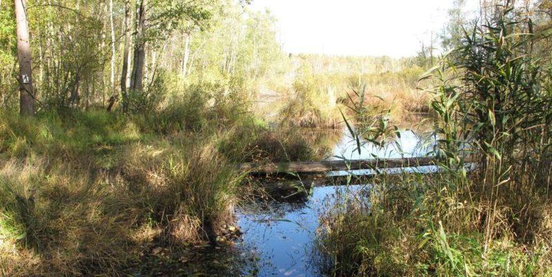 Заказник «Выгонощанский» болота
