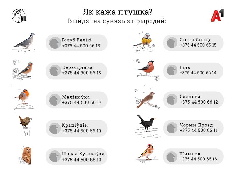 птицы телефон номер