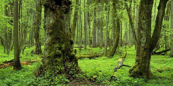 школа деревьев минск